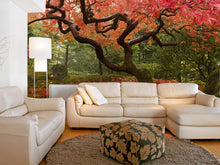 Load image into Gallery viewer, Japanese Maple in the Fall Wall Mural
