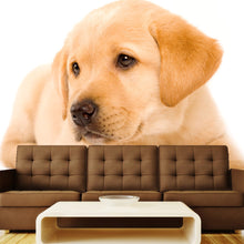 Load image into Gallery viewer, Labrador Retriever Puppy Wall Mural