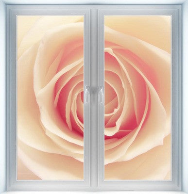Pink and White Rose Instant Window