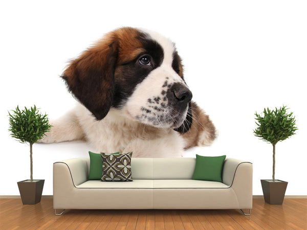 Puppy Saint Bernard Wall Mural