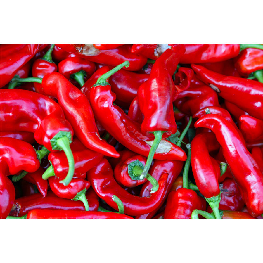 Red Chilli Pepper Wall Mural