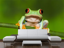 Load image into Gallery viewer, Red Eyed Tree Frog on Branch Wall Mural
