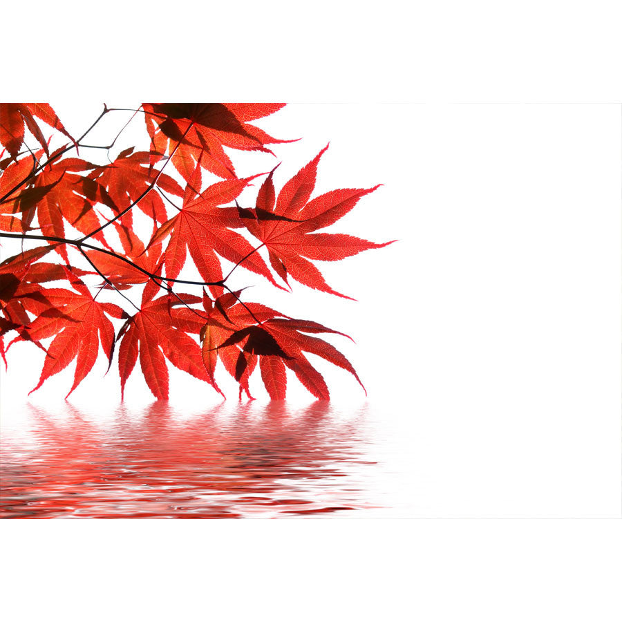 Red Japanese Maple Wall Mural