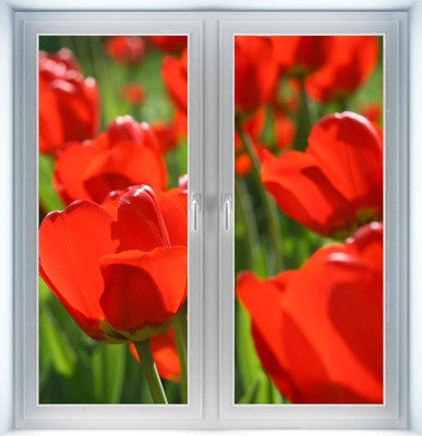 Red Tulips Instant Window