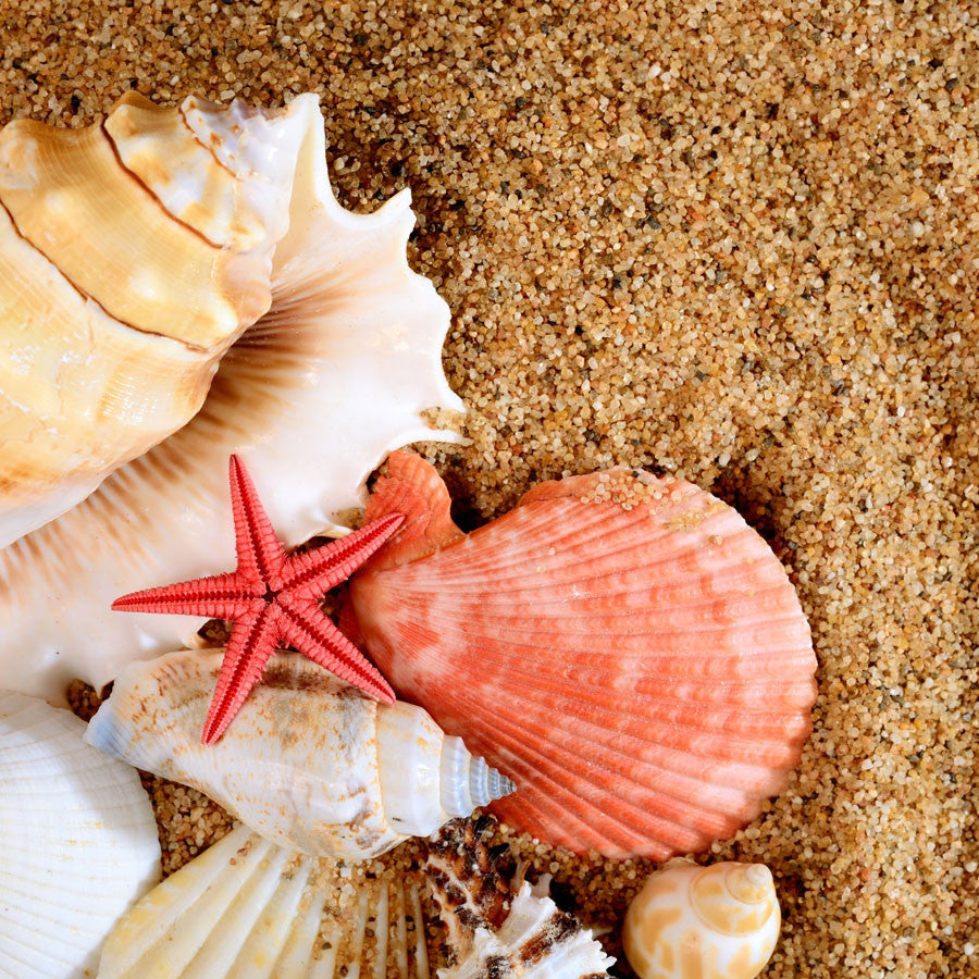 Sea Star and Shells Wall Mural