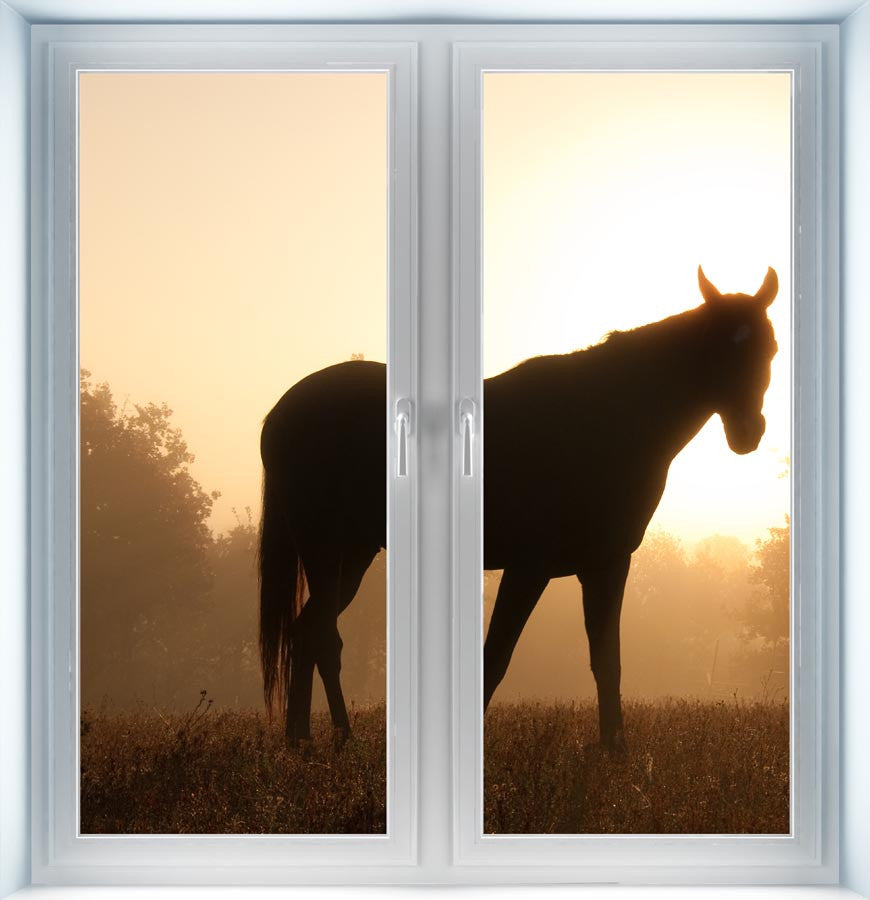 Silhouette of Arabian Horse Instant Window