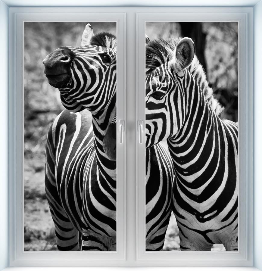 Two Zebras Instant Window