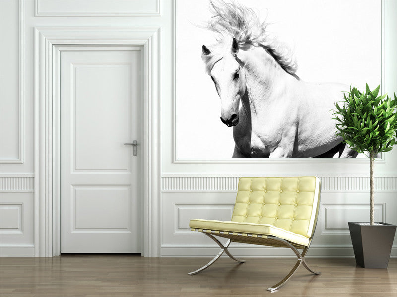 Horse Wall Murals white horse wall mural – majestic wall art