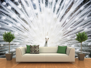 White Peacock  Wall Mural