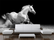 Load image into Gallery viewer, White Stallion  Wall Mural