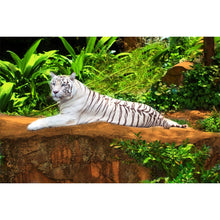 Load image into Gallery viewer, White Tiger Wall Mural