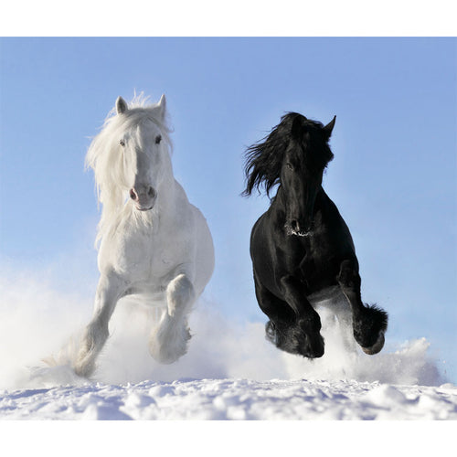 White and Black Horses Wall Mural