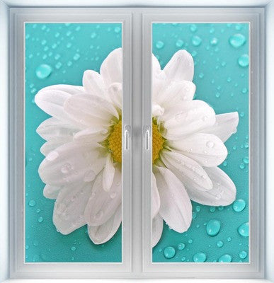 White Camomile Flower Instant Window
