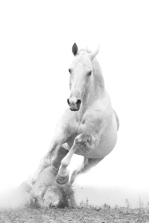White Horse Galloping Wall Mural