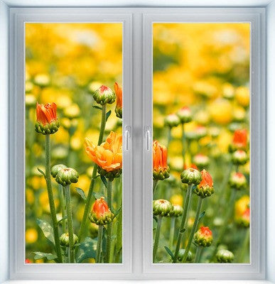 Yellow Chrysanthemum Flowers Instant Window