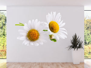 Art Daisies Spring White Wall Decal