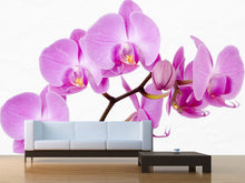 Load image into Gallery viewer, Beautiful Orchid Wall Mural
