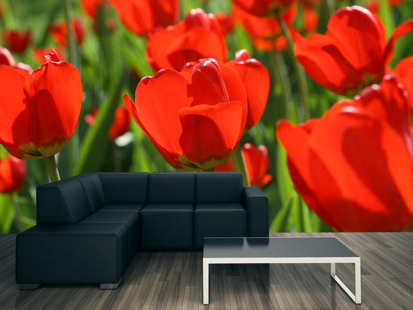 Beautiful Red Tulips Wall Mural