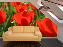 Load image into Gallery viewer, Beautiful Red Tulips Wall Mural