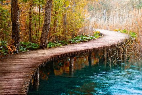 Boardwalk by Pond Wall Mural