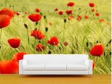 Load image into Gallery viewer, Bright Red Poppies Wall Mural