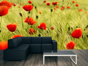 Bright Red Poppies Wall Mural