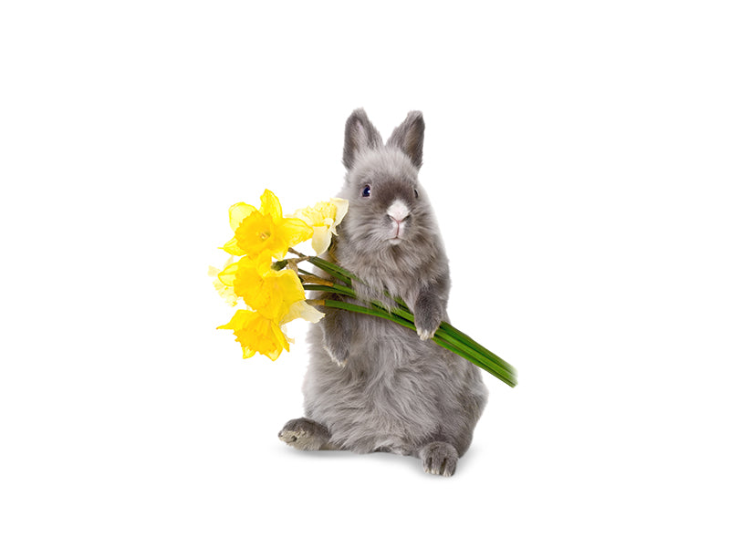 Bunny with Yellow Flowers Wall Decal
