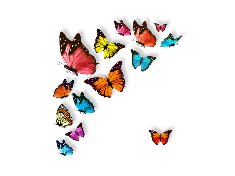 Colorful Butterflies Wall Stickers Wall Decal
