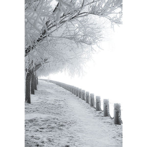 Frozen Tree and Rural Road Wall Mural
