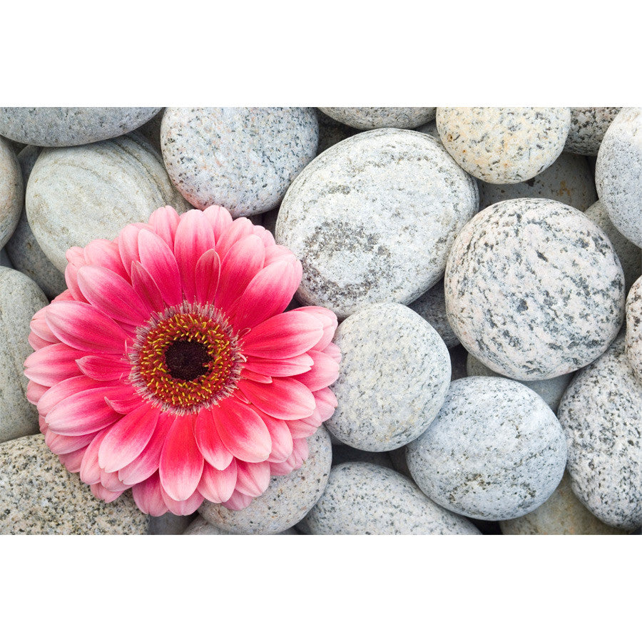 Pink Gerbera on Pebbles Wall Mural