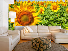 Load image into Gallery viewer, Sunshine under Blue Sky Wall Mural