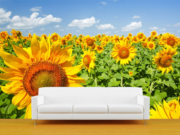 Sunshine under Blue Sky Wall Mural