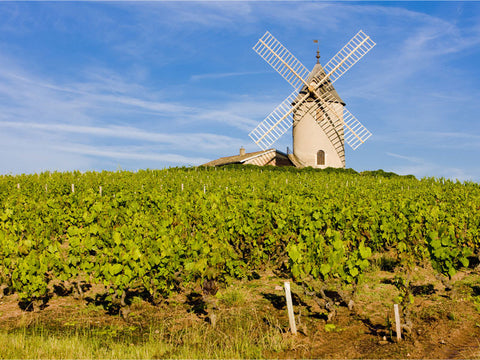Vineyard in France Wall Mural