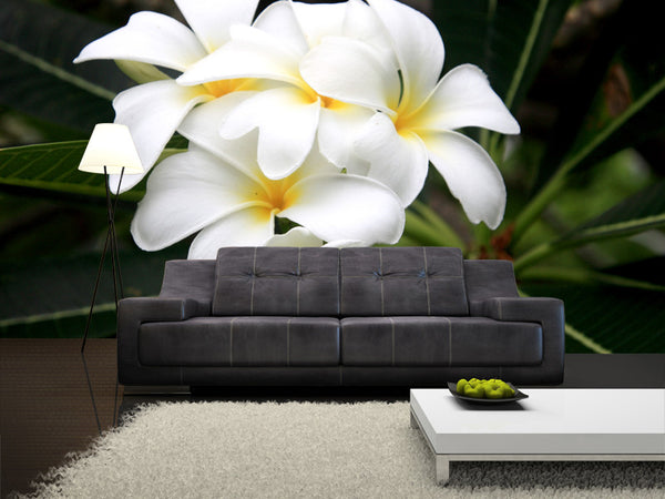 White Frangipani Flower Wall Mural