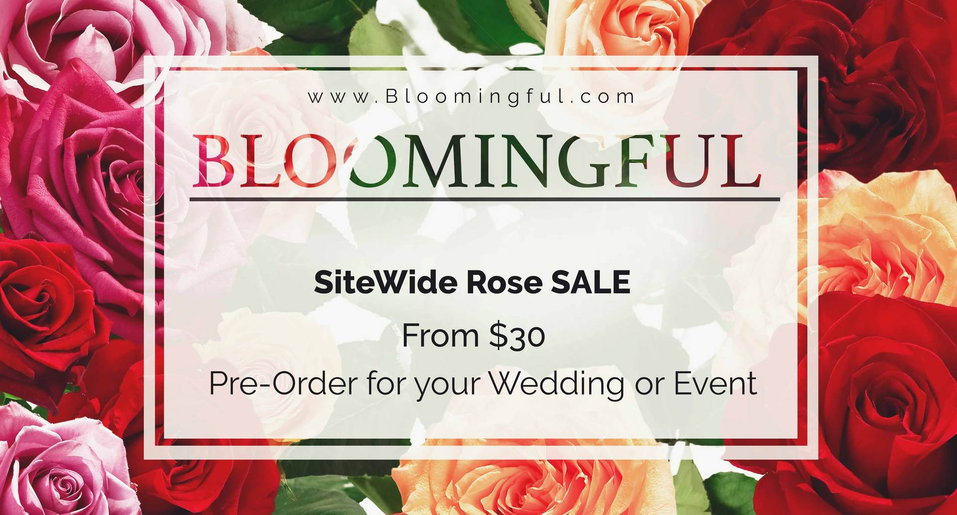 Wholesale_Roses_Sale