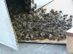 bees moving in hive