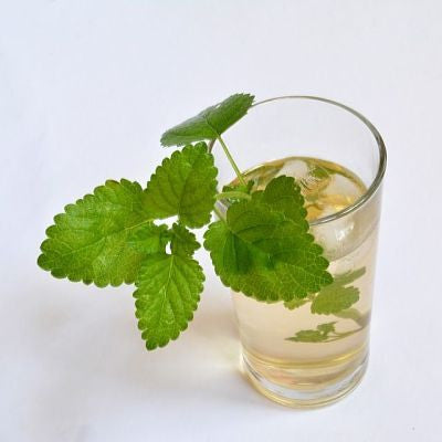 lemon balm, melissa officinalis, lime balm