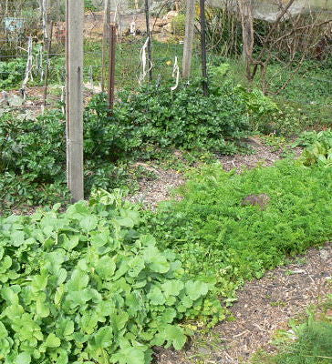 Start a Vegetable Garden - Get Ready for Spring! Saturday 8th of September 9-12 am, Katoomba