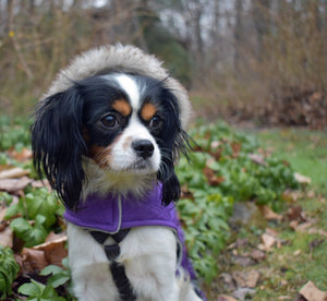 10 Cavaliers That Need Furever Homes