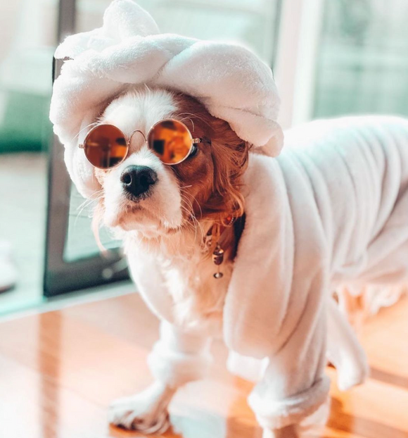 20 Tips For Cavalier King Charles Spaniel Tear Stain Removal