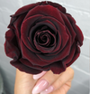 Luxury Single Rose Perfect Gift in Acrylic box-Fleur Du Luxe
