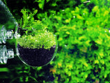 Aquarium Glass Pod Planter - Aqua Haus Singapore - 1