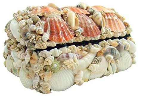Seashell Jewelry Box 6 inches long