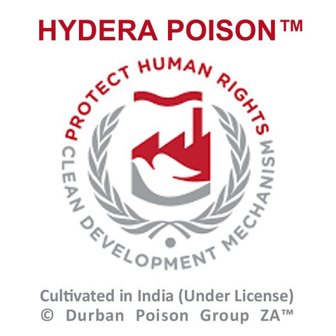 Hydera Poison™ (Cultivated in India) by Durban Poison Group ZA™ http://dpgza.com