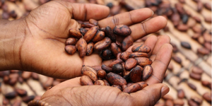 How Chocolate is Made | Part 4 | What Does Fairtrade Certified Chocolate Really Mean?