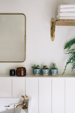 Small succulent plants in blue pots on a white shelf