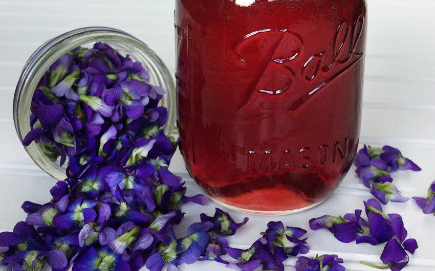 Wild Violet Recipes: Foraged Edible Flowers Taste Great