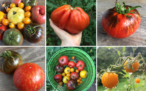 2018 Garden: Where the Heck are My Tomatoes?