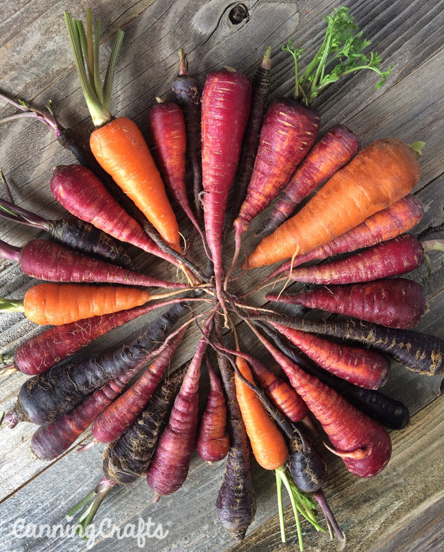 A history of carrot colors | CanningCrafts.com