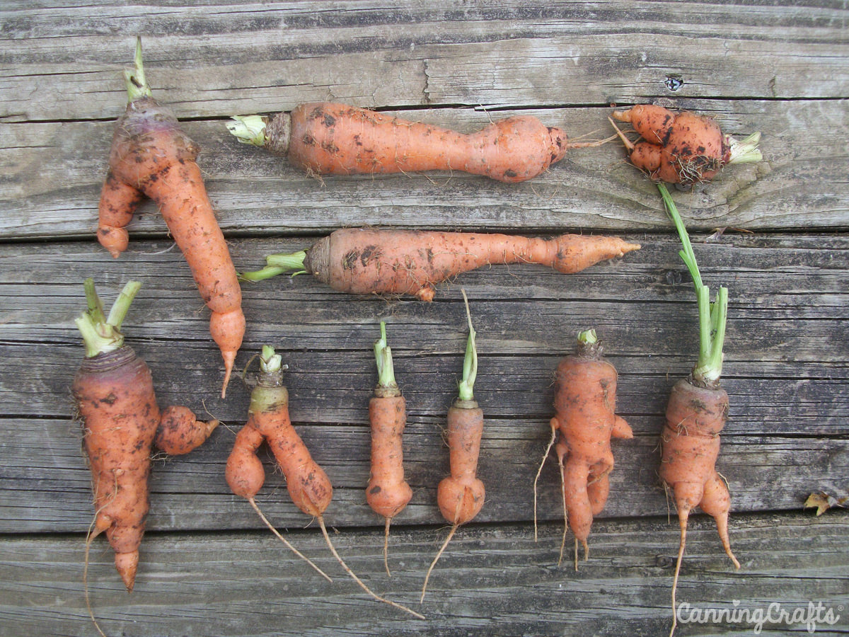 CanningCrafts garden carrots